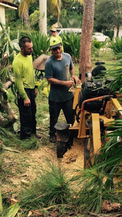 Removing A Large Stump In Boca Raton