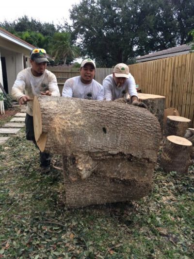 Tree Removal Is Hard Work Here In Boca Raton