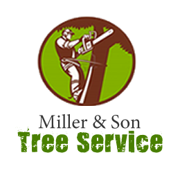 Miller Son Tree Service In Tampa